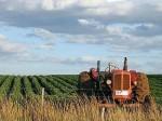 AGRICOLTURA E PASTORIZIA IN SARDEGNA – APPUNTI SUL VI CENSIMENTO