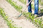 Agricoltura urbana, iniziative dal basso, una vera transizione